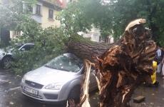 poza copac 3