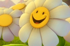 smile glume politicieni