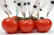 organisme-modificate-genetic