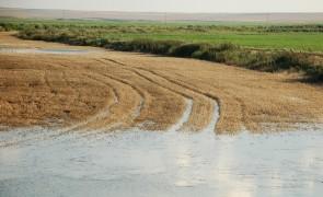 calamitati agricultura