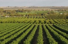 fonduri europene agricultura