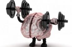 creier sanatos