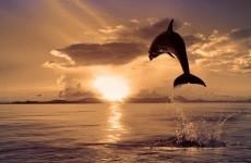 poze_delfin