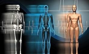 corpul uman 1