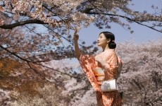 Woman in Traditional Dress Beside Cherry Blossom Trees