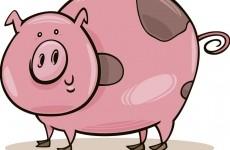 purcelus, porc