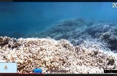 google ocean explore