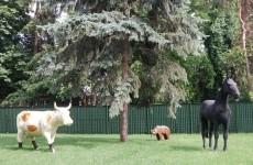 cal vaca urs