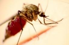 malarie