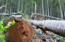 lemn jaf