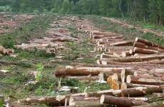12_guvernul-pregateste-un-nou-cod-silvic-ministrul-padurilor-si-apelor-ii-va-nemultumi-pe-cei-care-au-fost-partasi-la-furtul-lemnului-203144