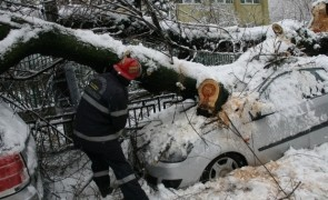 copac cazut masina zapada