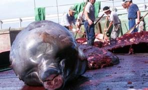 balena ucisa