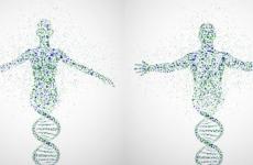 genom uman adn