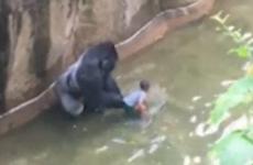 gorila zoo