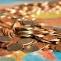 diverse, bani, monede