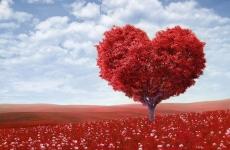colesterol, inimă