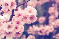 primăvara, flori, cald