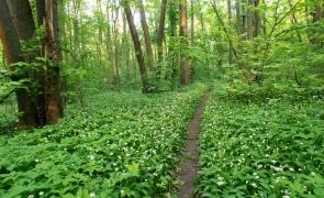 Pădurea Băneasa