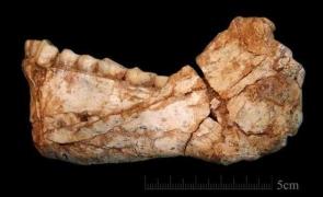 fosile1