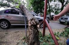 Inquam copaci cazuti pagube