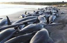 balene eșuate