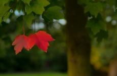 vreme, toamnă, frunze