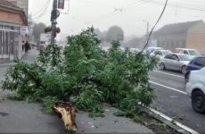 copaci căzuți, furtună, vânt