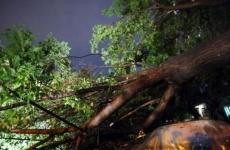 copac căzut, furtună