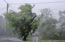 copaci, ploaie, vânt puternic
