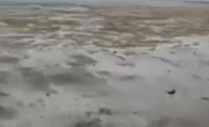 ocean secat bahamas