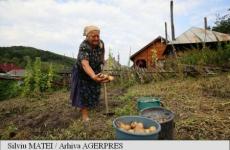 bătrâni agricultură