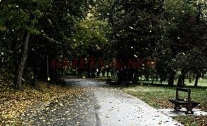 vreme, frig, parc