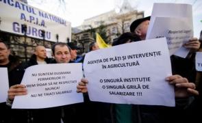 protest APIA la Guvern