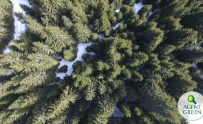 pădure, păduri, copaci