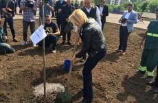 Firea Baluta plantat pom parc