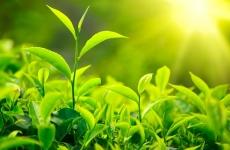 soare iarba agrometeorologie