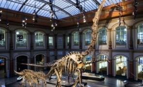 schelet dinozaur