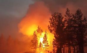 incendii padure