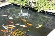 Bazin pești