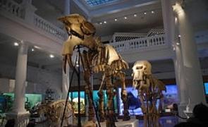 Muzeu Antipa