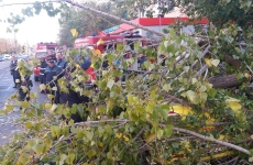 copac cazut furtuna