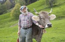 Armin Capaul vaca