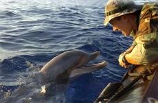 delfin si militar american