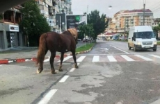 Cal în Botoșani