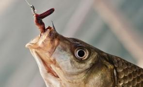 peste rama momeala pescuit