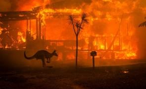 Australia incendii padure