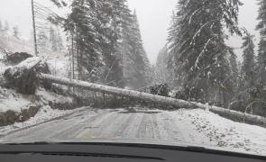 copac cazut, drum inchis