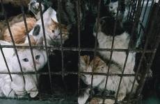 pisici cusca