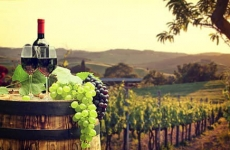 vita de vie vin